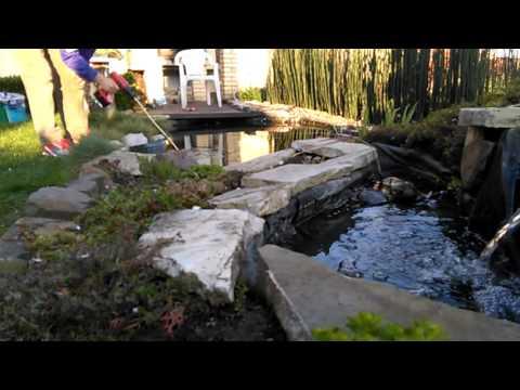 Pond algae remover
