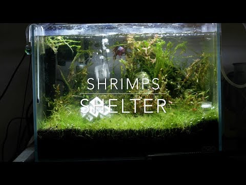Ceramic shrimp shelter