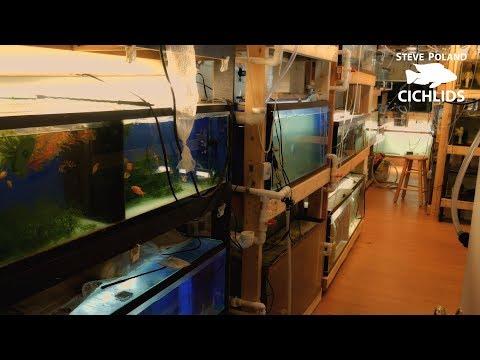 Huge Basement Fishroom Tour - 60+ Tanks, African Cichlids and More