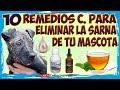 Como Curar la Sarna de tu Perro -10 Remedios Caseros para Eliminar la Sarna de tu Mascota  🐶🐱