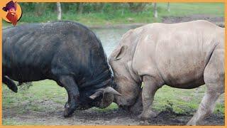 15 Times Rhinos And Buffalos Take The Stage!