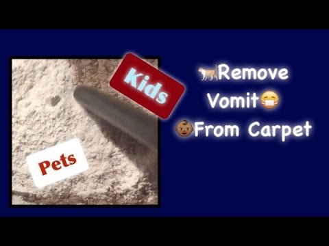 How to Clean Vomit out of Carpet | Tips for kids and pets