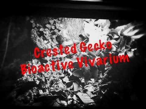 Bioactive Crested Gecko Vivarium Build: The BioDude