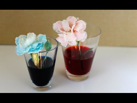 How to make a Colourful flowers science experiment