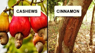 Facts That Prove We Have No Idea How Food Grows