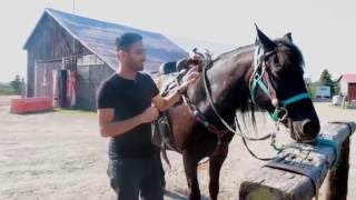 ZaidAliT Gets Attacked By A Horse!