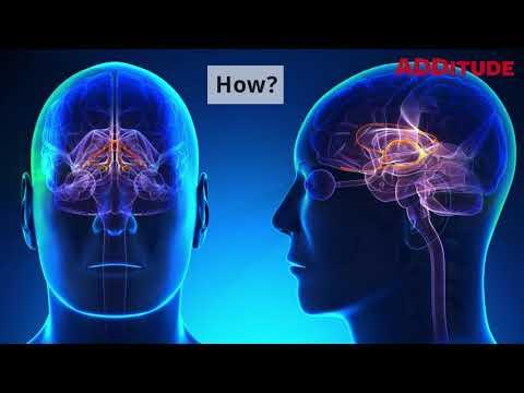 Inside the ADHD Brain: Impulsivity, Explained
