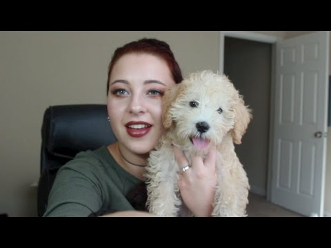 Life Update! Puppy, Another Tattoo, Teaching Yoga, New Business!