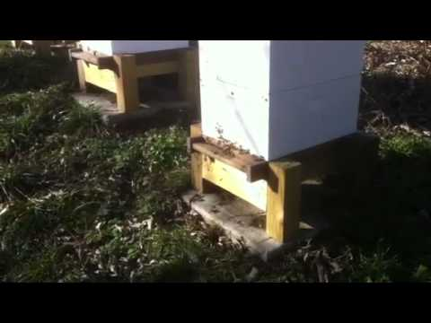 Bees out on January 6, 2012