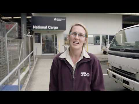 Fanimals follows the arrival of Auckland Zoo's cheetah sisters!