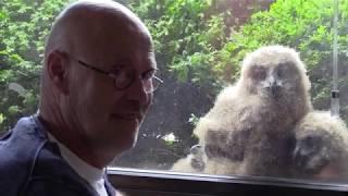 Man deelt woning met oehoe-familie | Radio  | Vroege Vogels
