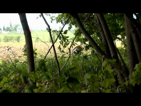 Tearin Em' Up in Ontario - Clip from Zink Calls' Turkey Time 4