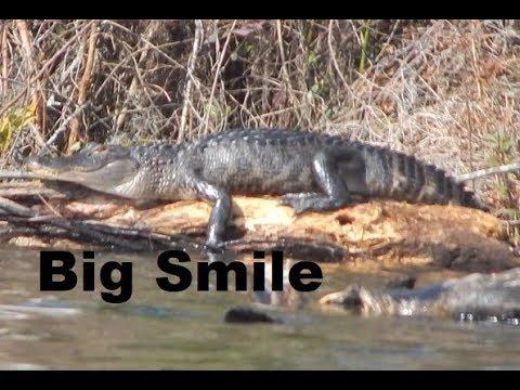 Watertown Lake Columbia County Florida Gators everywhere