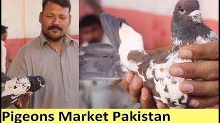 Kabli Kabootar sale in Lalo Khait Birds Market Pakistan 2017