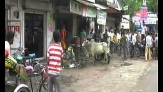 Download Bull Fight & Trishul Vaale Sadhu Maharaaj ki on Road Hardoi(U.P.)