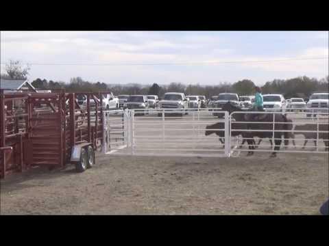 Bud box on horse
