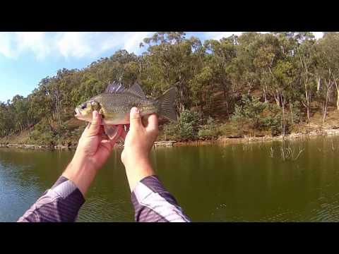 Lake Lyell Fishing