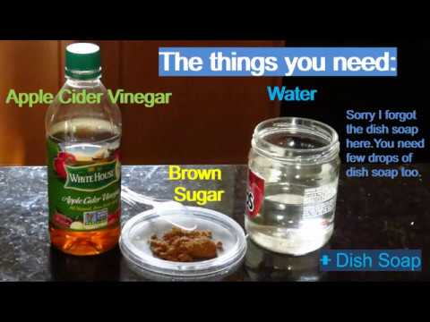 Very easy & successful method to get rid of gnats and fruit flies.