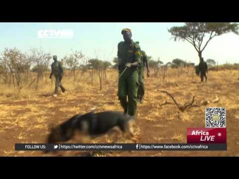 Elephant poaching in Tanzania