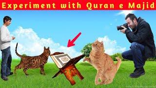 Experiment with Quran e Majid