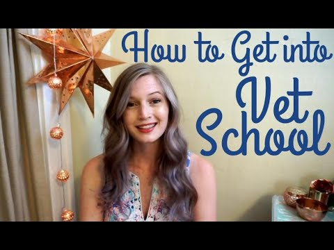How to Get into Vet School | BellaVet