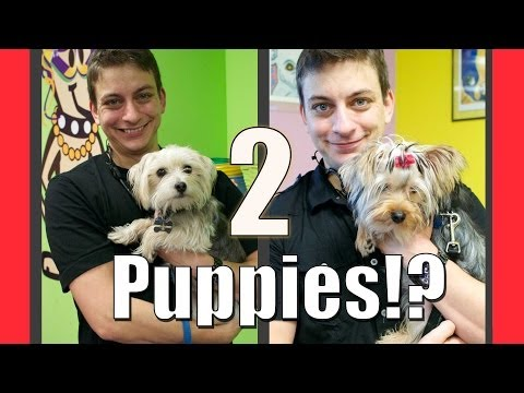 Can you train 2 puppies at once? Only if you do this...