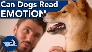 Can Dogs Understand Our Emotions?