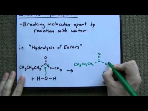 What is Hydrolysis? + Examples