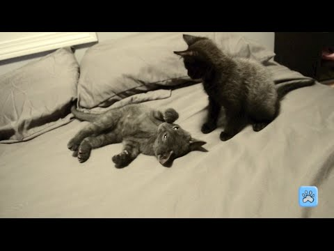 Adorable Kittens Playing