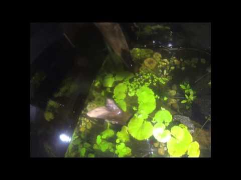 Amazing 3D Aquarium Background Aquascape Freshwater Tank inside Tank Custom Rock
