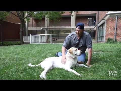 Veteran's comfort dog helps calm PTSD symptoms