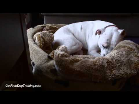 How To Crate Train An Adult Dog Tips Crate Training Older Dog