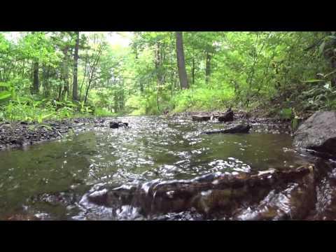 Pine Run Creek- 11 June 2016
