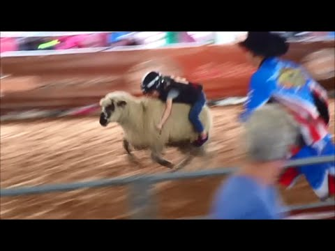 Mutton Bustin 2014 Houston Rodeo