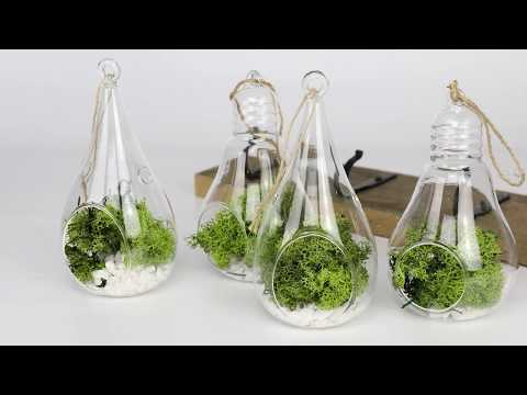 How To Make Your Own Hanging Glass Terrarium