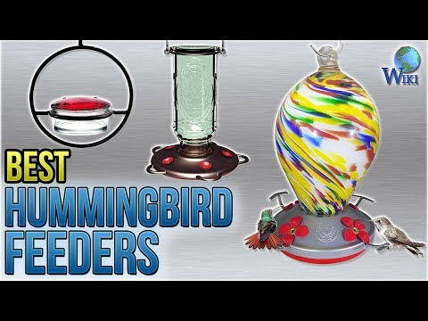 10 Best Hummingbird Feeders 2018