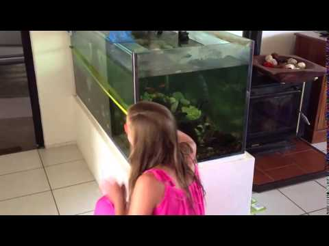 How to measure the length of a fish tank