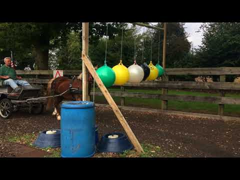 Driving a pony bitless - Barry Hook, Horse Drawn Promotions