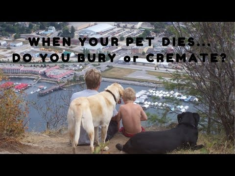 What To Do When Your Pet Dies...