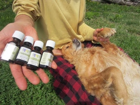 Natural Flea & Tick Repellent for Dogs - Natural Remedy!
