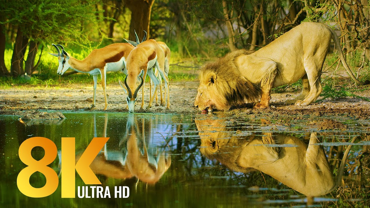 Amazing Wildlife of Botswana - 8K Nature Documentary Film (with music)