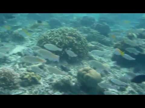 Snorkelling Linapacan Palawan Pt 2