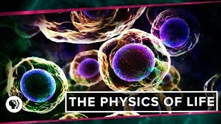The Physics of Life (ft. It