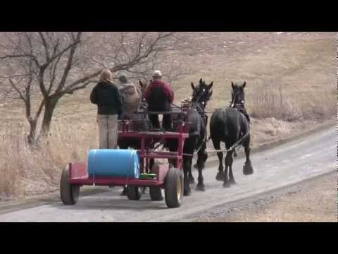 Windermere 4 Horse Hitch Practice