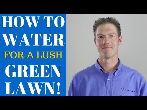5 Watering Tips For a Lush, Green Lawn