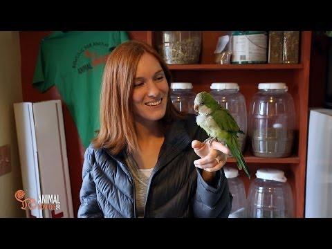 Chopsticks the Quaker Parrot