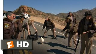 Reno 911!: Miami (2/10) Movie CLIP - Stop, Chicken, Stop! (2007) HD