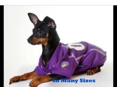 Authentic NFL Team Jerseys for Dogs