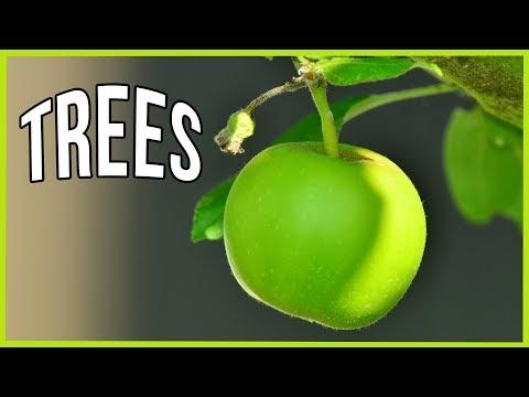 Stark Bro's Nurseries Fruit Tree Replacement