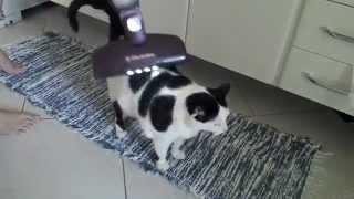 Gato Leo E O Aspirador